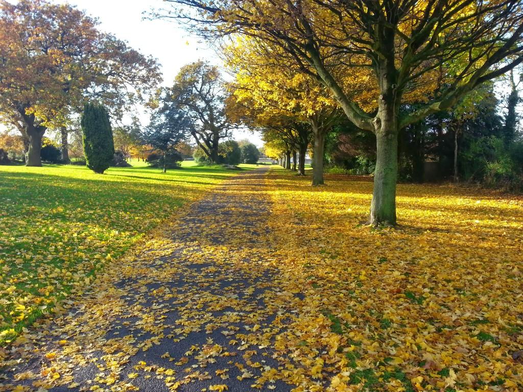 Autumnal Deer Park