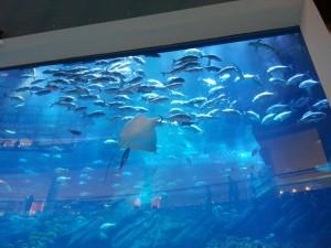 The aquarium in Dubai mall.